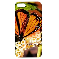 Monarch Butterfly Nature Orange Apple Iphone 5 Hardshell Case With Stand