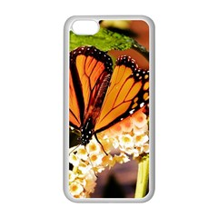 Monarch Butterfly Nature Orange Apple Iphone 5c Seamless Case (white)