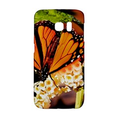 Monarch Butterfly Nature Orange Galaxy S6 Edge