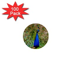 Peacock Animal Photography Beautiful 1  Mini Buttons (100 Pack)