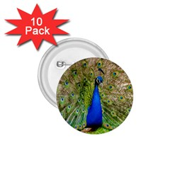 Peacock Animal Photography Beautiful 1 75  Buttons (10 Pack)