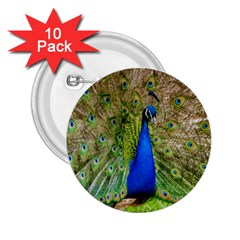 Peacock Animal Photography Beautiful 2 25  Buttons (10 Pack)
