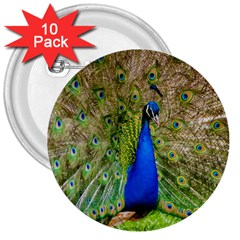 Peacock Animal Photography Beautiful 3  Buttons (10 Pack)