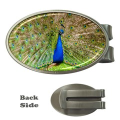 Peacock Animal Photography Beautiful Money Clips (oval)