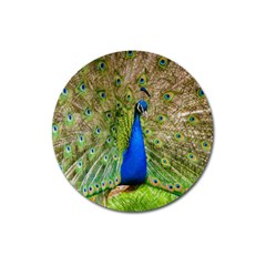 Peacock Animal Photography Beautiful Magnet 3  (round)