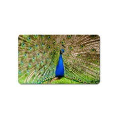 Peacock Animal Photography Beautiful Magnet (Name Card)