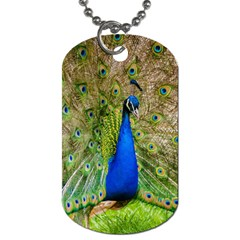 Peacock Animal Photography Beautiful Dog Tag (two Sides)