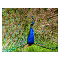 Peacock Animal Photography Beautiful Rectangular Jigsaw Puzzl
