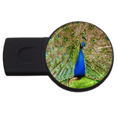 Peacock Animal Photography Beautiful Usb Flash Drive Round (4 Gb)
