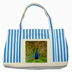 Peacock Animal Photography Beautiful Striped Blue Tote Bag
