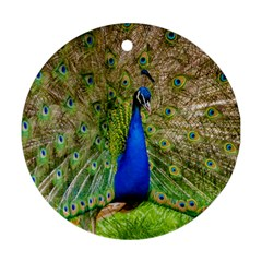 Peacock Animal Photography Beautiful Round Ornament (Two Sides)