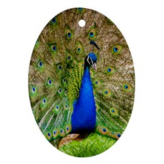 Peacock Animal Photography Beautiful Oval Ornament (two Sides)
