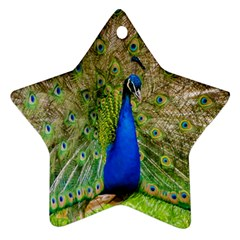 Peacock Animal Photography Beautiful Star Ornament (two Sides)
