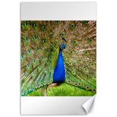 Peacock Animal Photography Beautiful Canvas 24  X 36