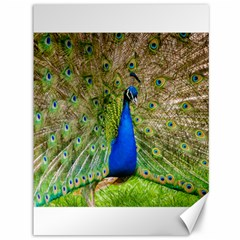 Peacock Animal Photography Beautiful Canvas 36  X 48