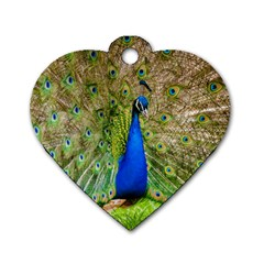 Peacock Animal Photography Beautiful Dog Tag Heart (one Side)