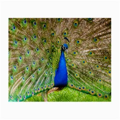 Peacock Animal Photography Beautiful Small Glasses Cloth (2 Side)