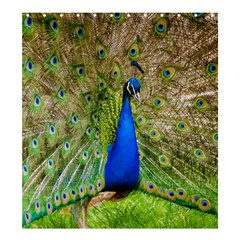 Peacock Animal Photography Beautiful Shower Curtain 66  x 72  (Large)