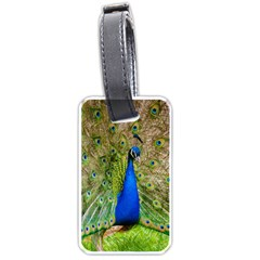 Peacock Animal Photography Beautiful Luggage Tags (two Sides)