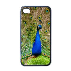 Peacock Animal Photography Beautiful Apple Iphone 4 Case (black)