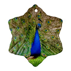 Peacock Animal Photography Beautiful Ornament (snowflake)