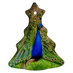 Peacock Animal Photography Beautiful Ornament (christmas Tree)