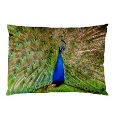 Peacock Animal Photography Beautiful Pillow Case (two Sides)
