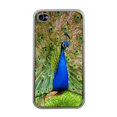 Peacock Animal Photography Beautiful Apple Iphone 4 Case (clear)