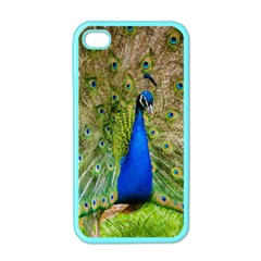 Peacock Animal Photography Beautiful Apple Iphone 4 Case (color)