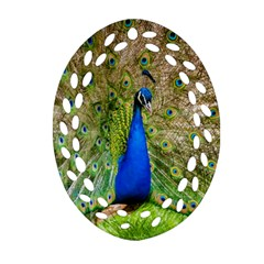 Peacock Animal Photography Beautiful Ornament (oval Filigree)