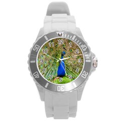 Peacock Animal Photography Beautiful Round Plastic Sport Watch (l)