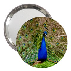 Peacock Animal Photography Beautiful 3  Handbag Mirrors
