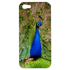 Peacock Animal Photography Beautiful Apple Iphone 5 Hardshell Case