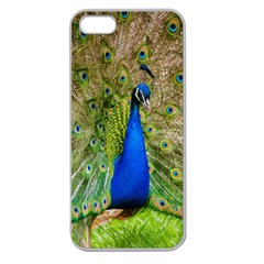 Peacock Animal Photography Beautiful Apple Seamless Iphone 5 Case (clear)