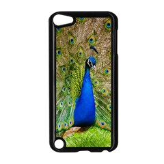 Peacock Animal Photography Beautiful Apple Ipod Touch 5 Case (black)