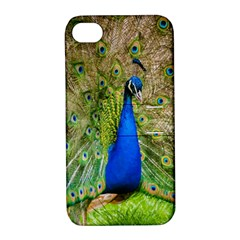 Peacock Animal Photography Beautiful Apple Iphone 4/4s Hardshell Case With Stand