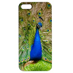 Peacock Animal Photography Beautiful Apple Iphone 5 Hardshell Case With Stand