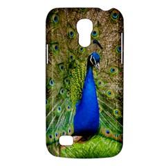 Peacock Animal Photography Beautiful Galaxy S4 Mini