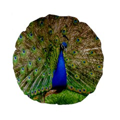 Peacock Animal Photography Beautiful Standard 15  Premium Flano Round Cushions