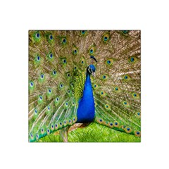Peacock Animal Photography Beautiful Satin Bandana Scarf