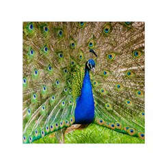 Peacock Animal Photography Beautiful Small Satin Scarf (square)