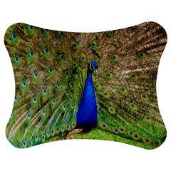 Peacock Animal Photography Beautiful Jigsaw Puzzle Photo Stand (bow)