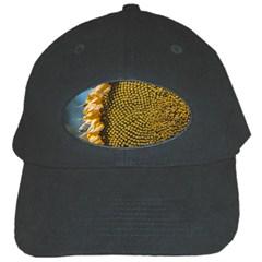 Sunflower Bright Close Up Color Disk Florets Black Cap