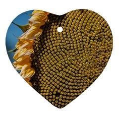 Sunflower Bright Close Up Color Disk Florets Ornament (heart)