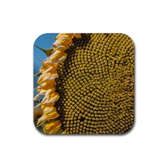 Sunflower Bright Close Up Color Disk Florets Rubber Square Coaster (4 Pack)