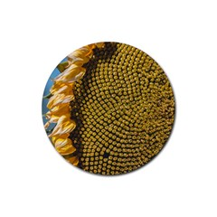 Sunflower Bright Close Up Color Disk Florets Rubber Coaster (round)