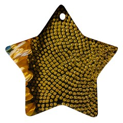 Sunflower Bright Close Up Color Disk Florets Star Ornament (two Sides)