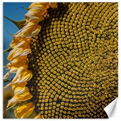 Sunflower Bright Close Up Color Disk Florets Canvas 12  X 12