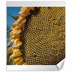 Sunflower Bright Close Up Color Disk Florets Canvas 20  X 24