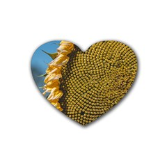 Sunflower Bright Close Up Color Disk Florets Rubber Coaster (heart)